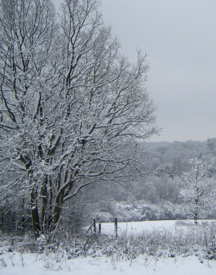 Snow in Banstead  in Jan 2010 - Park Downs (1)