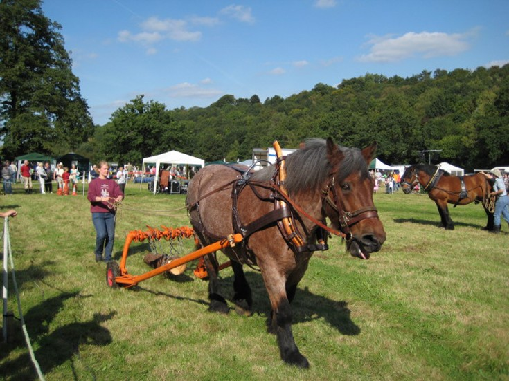 Shire Horses at the 2008 Banstead Countryside Day