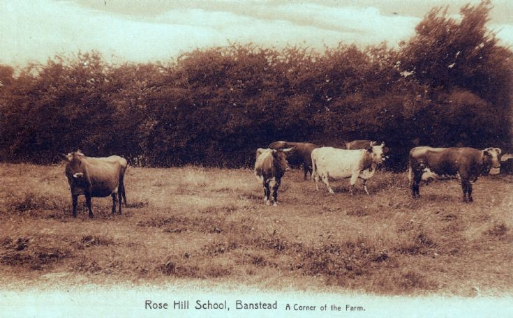 Rose Hill School, The Farm