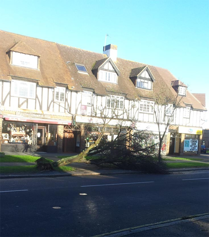 Tree down in Banstead High Street