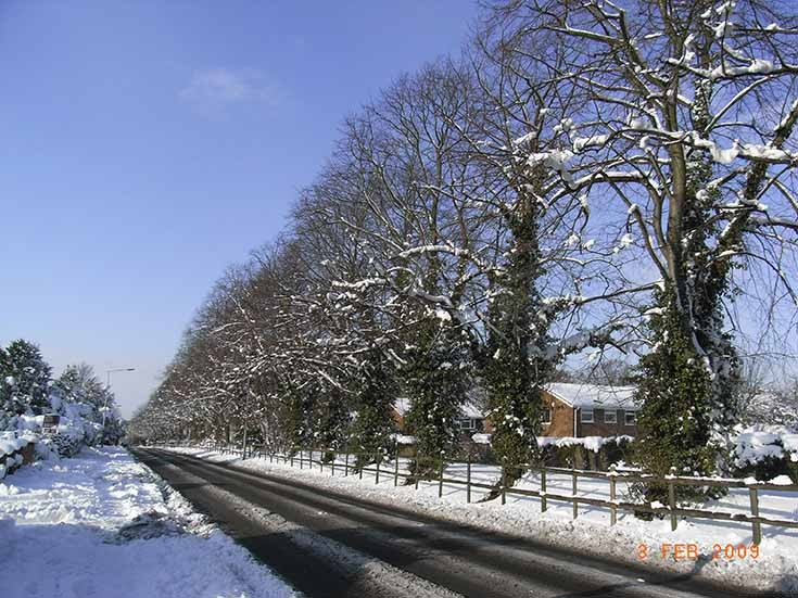 Snow covered trees Fir Tree Road Nork Banstead