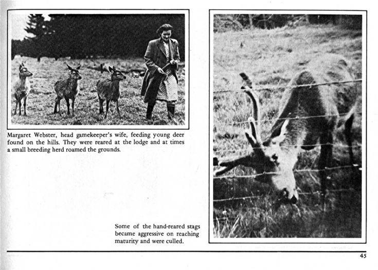 45 Deer Rearing