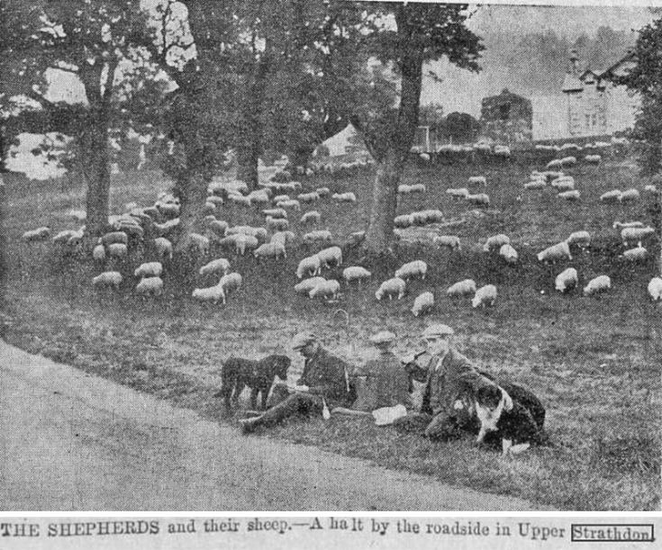 27 Shepherds at Colquhonnie