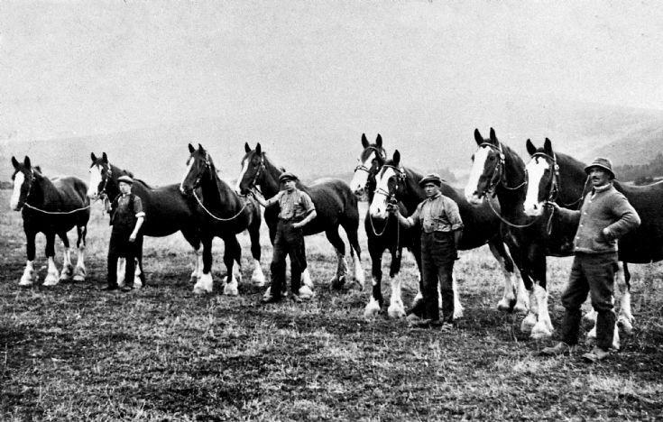 111 Horses Mains Farm Glenbuchat