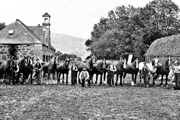 144 Horses at the Mains Farm Glenbuchat