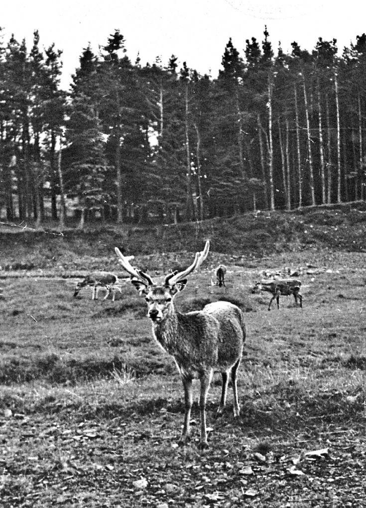 31 Deer at Upper Lodge Glenbuchat