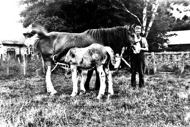 121 Horse and foal beside shop at Glenbuchat
