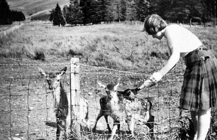 181 Feeding young deer, Upper Lodge. Webster girl.