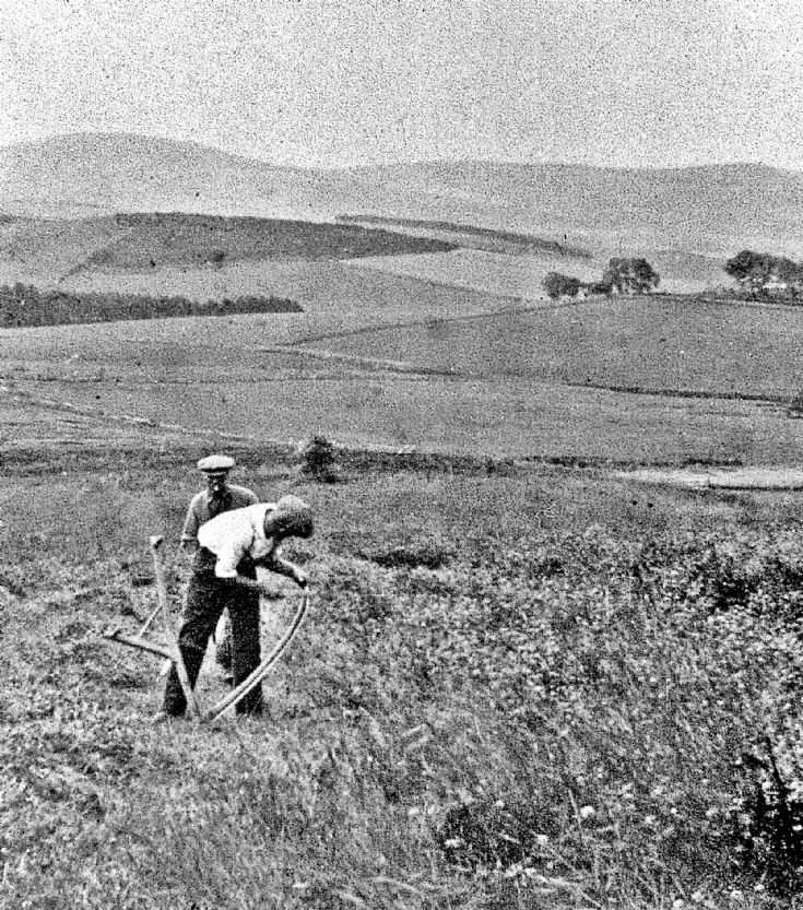 217 Cutting Hay at Craighead Glenbucat