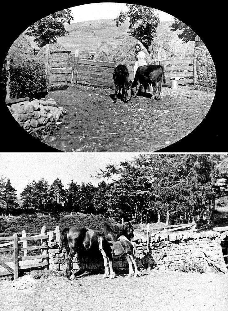 29 Strathdon Slides - Horses