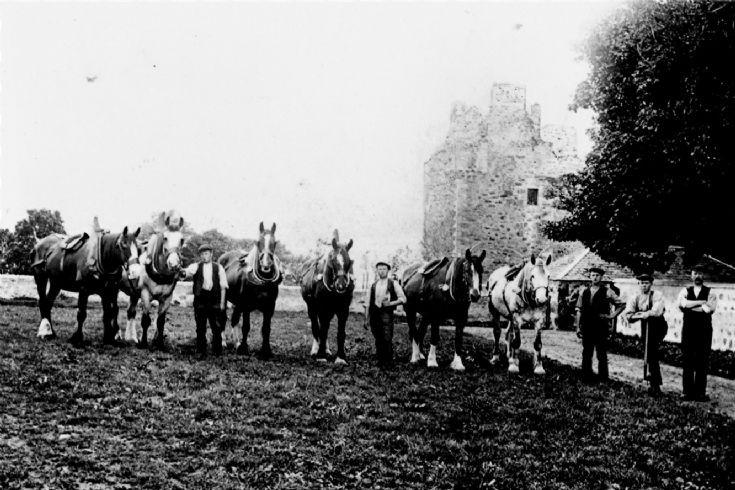 21 Mains Farm Horses