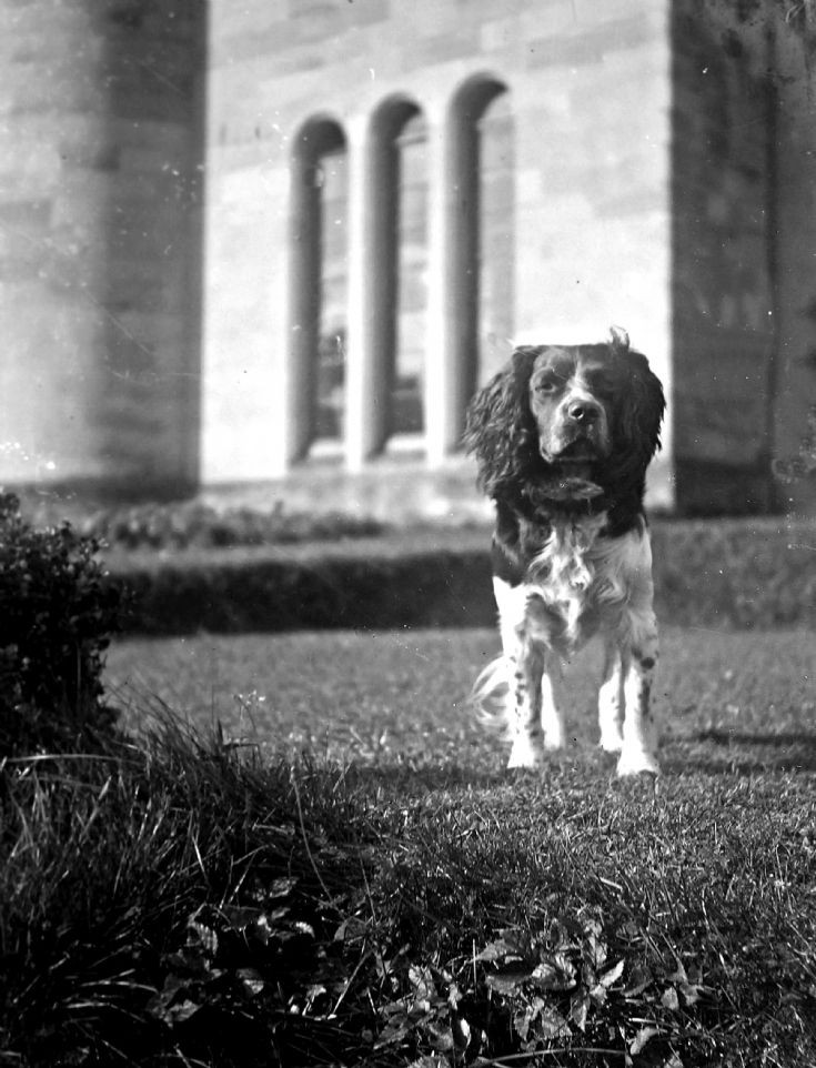 55 Spaniel at Castle Newe