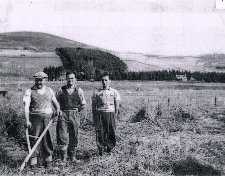 81 Haymaking