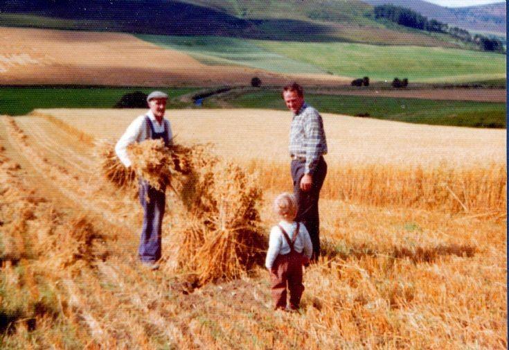 61 Harvest