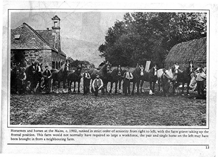 13 Mains of Glenbuchat Horses