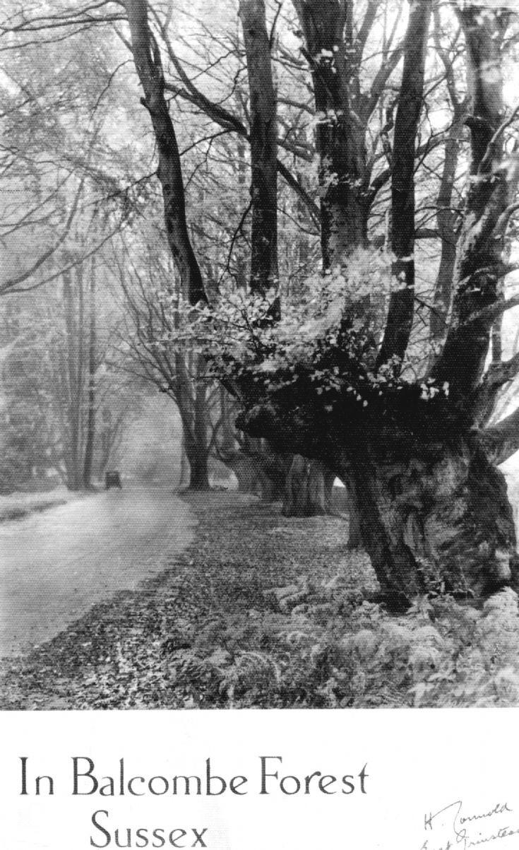 The Granny Tree, Balcombe Lane, Handcross