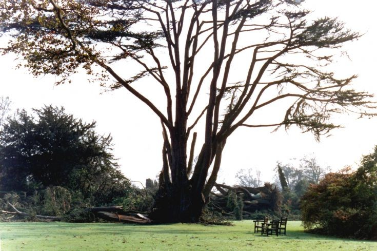 Great Storm damage to cedar tree in Nymans