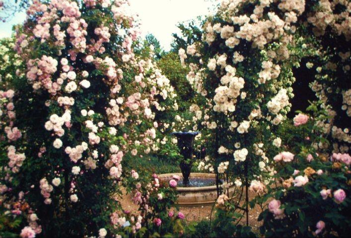 Nymans - Rose Garden renovation (6)