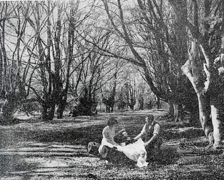 A picnic in Balcombe Forest