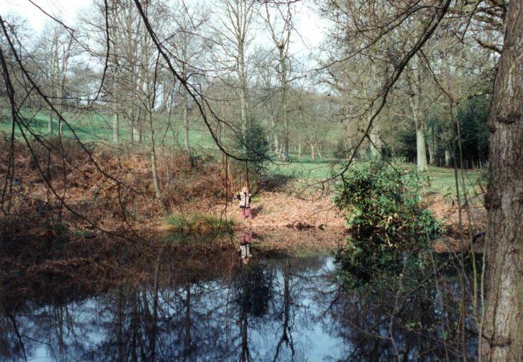 Goldfish pond at Nymans