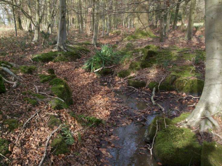 Woodhurst - The disappearing rock garden (2 of 2)