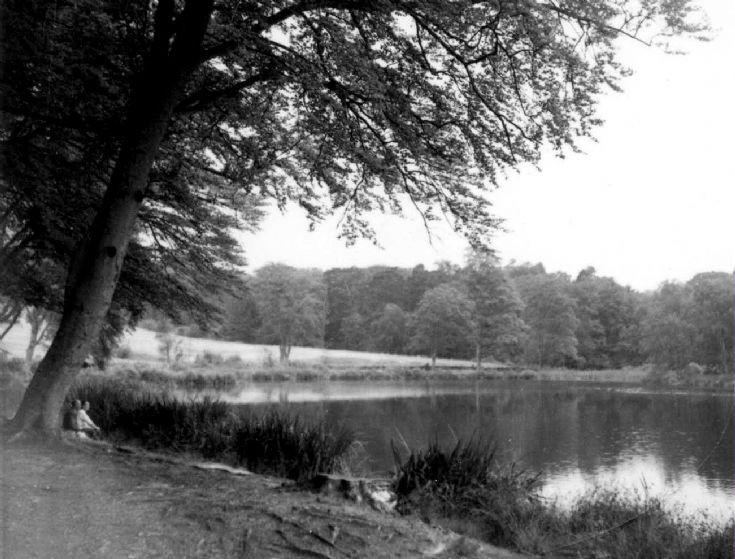 Slaugham Furnace Pond (8 of 11)