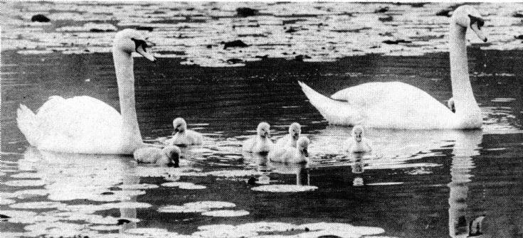 Slaugham Furnace Pond (11 of 11)