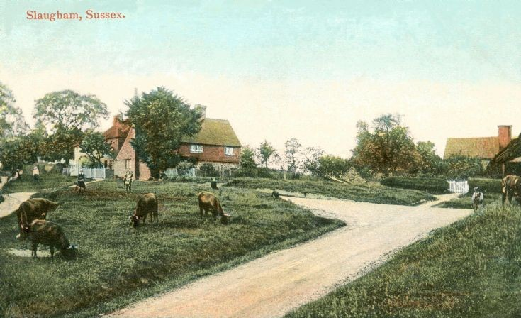 Cattle on Slaugham Green