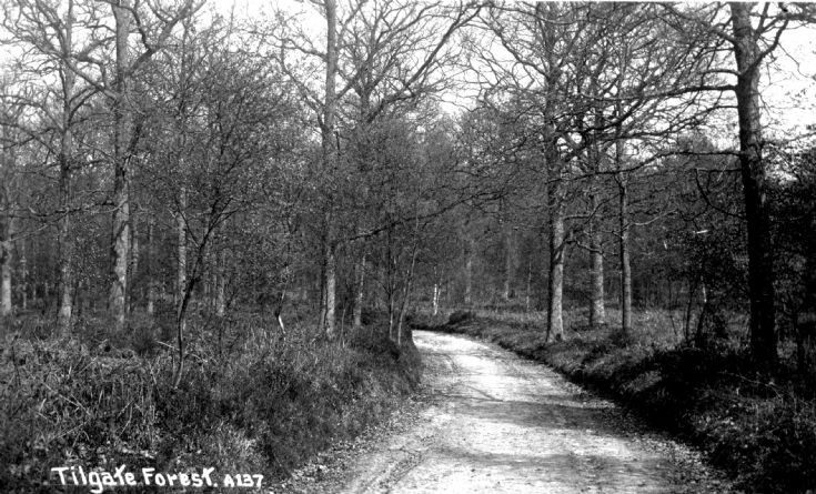 A forest road in Tilgate Forest