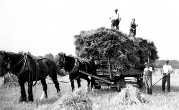 Harvesting at High Beeches, Handcross (1 of 2)