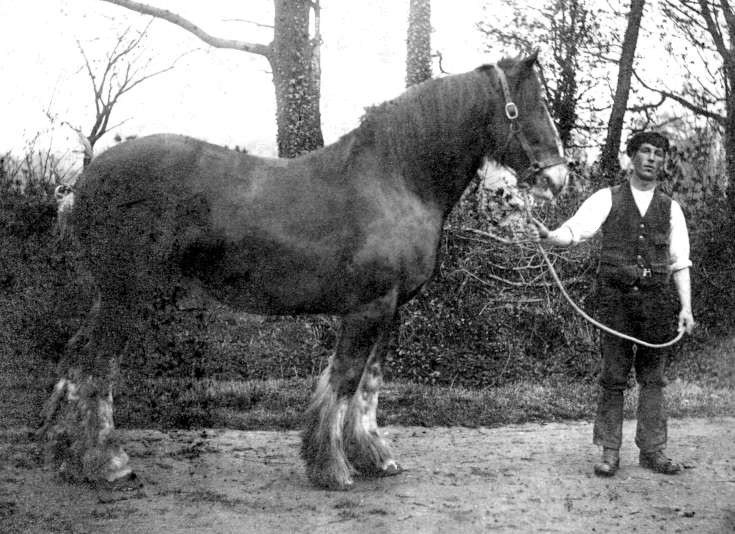 George Richard Jenner with draft horse