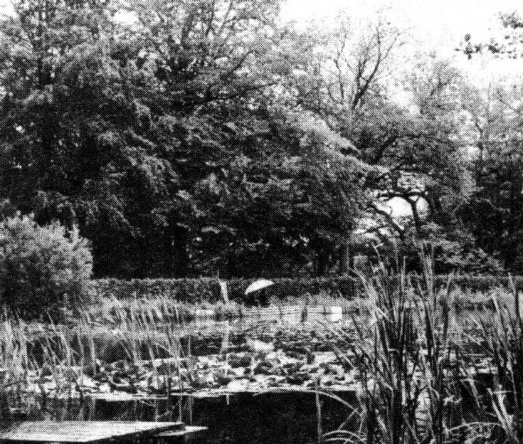 My Ladies' Bowl at Slaugham Furnace Pond (3 of 4)