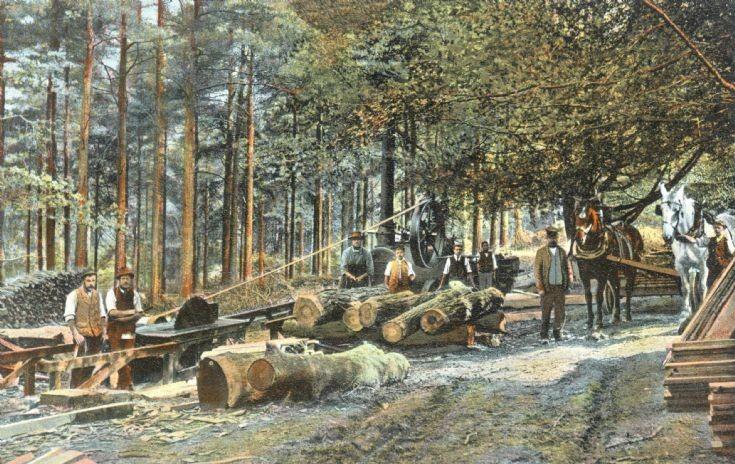 Tilgate sawmill
