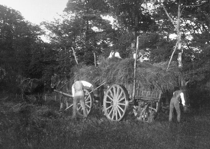 Harvesting on the Tilgate Estate