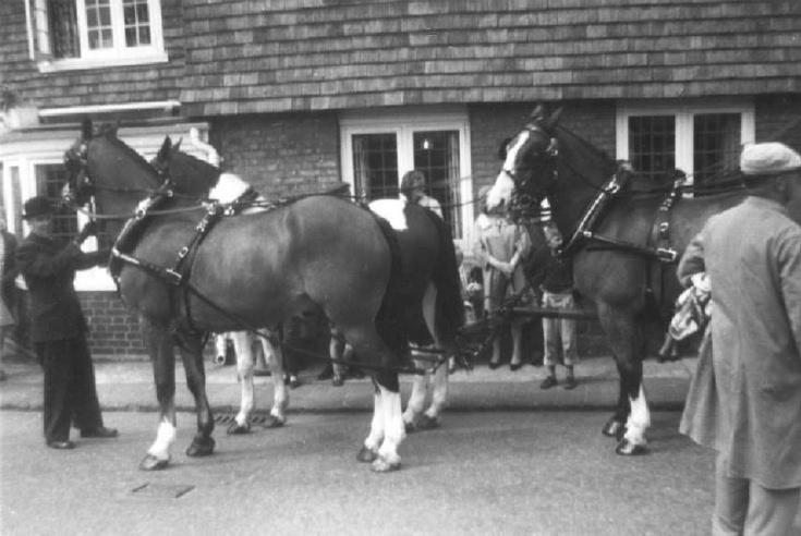 Stagecoach horses at Red Lion