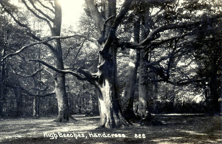 Unknown man sitting under trees in Balcombe Lane